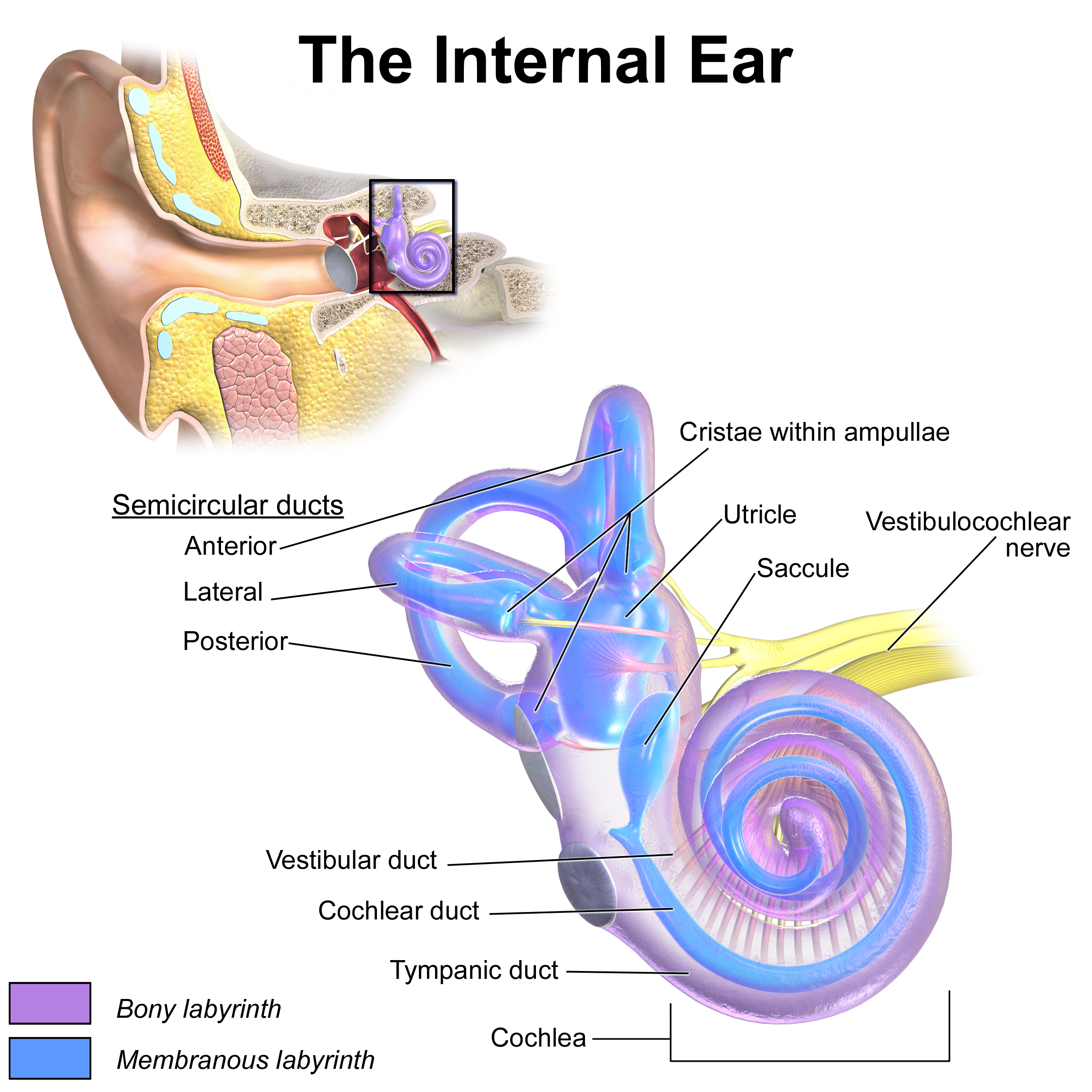 the ear and hearing loss essay Being the only student with a hearing loss my son, harrison, is 14 years old, has mild-to-moderate hearing loss in one ear and a moderate loss in the other, and uses.